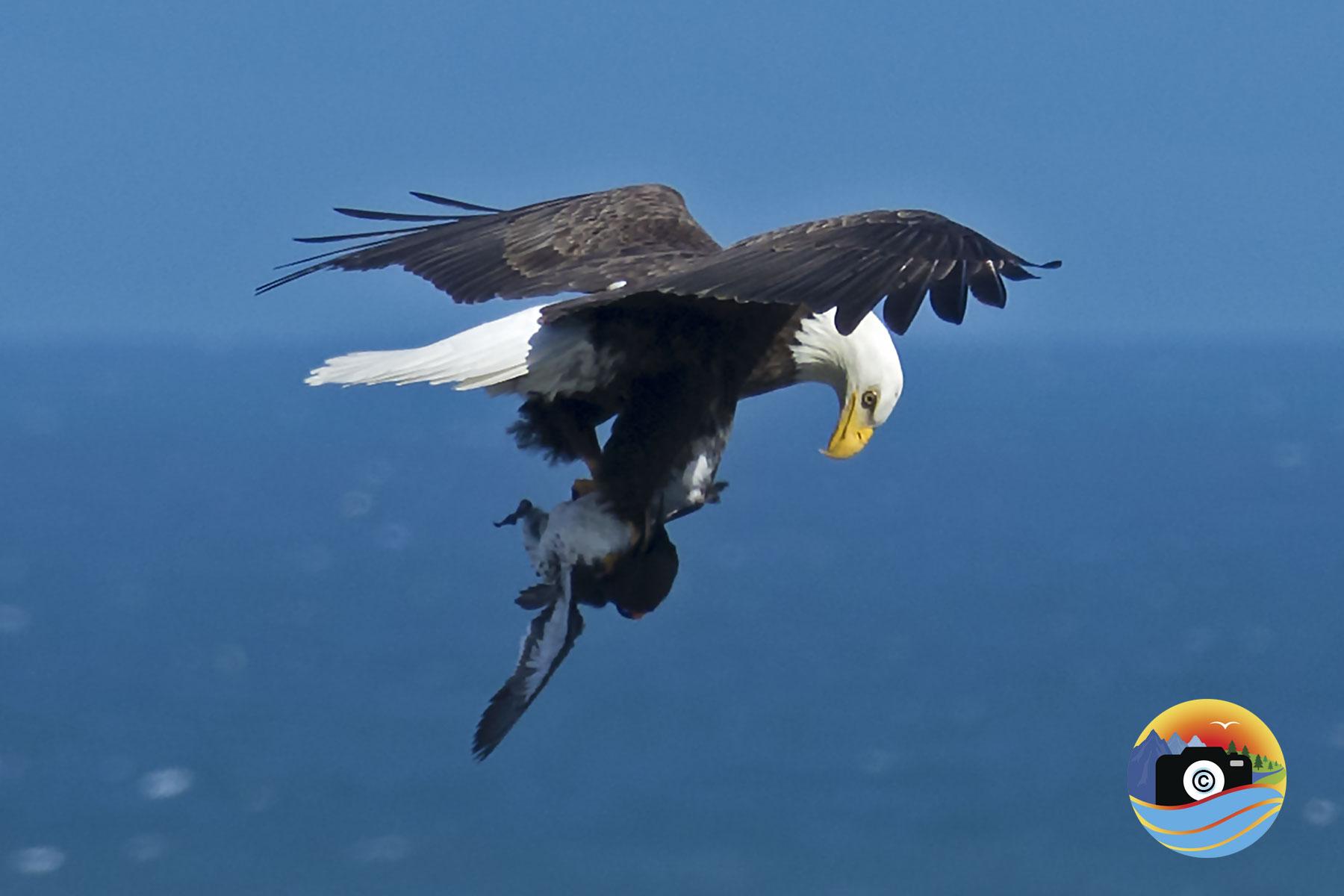 EAGLE-EATS-1