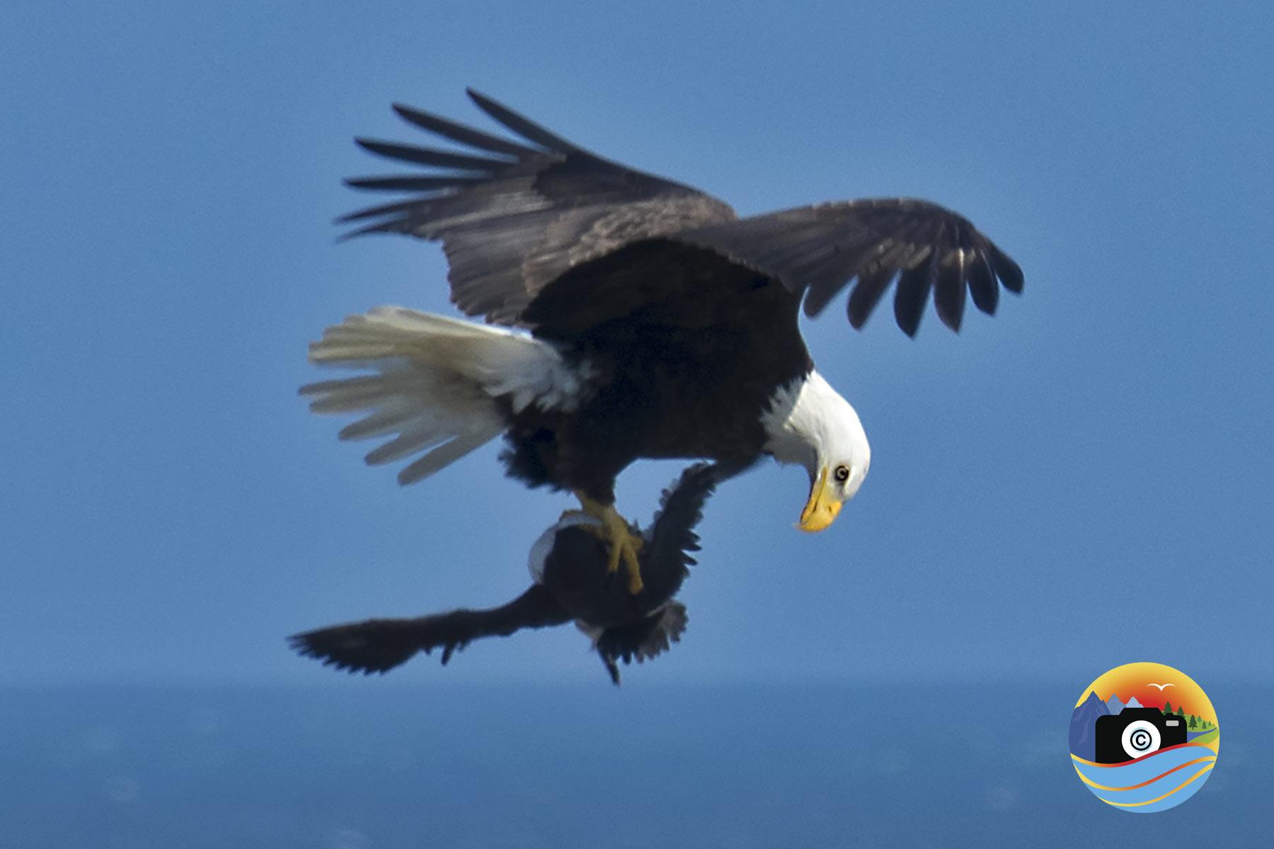 EAGLE-EATS-2