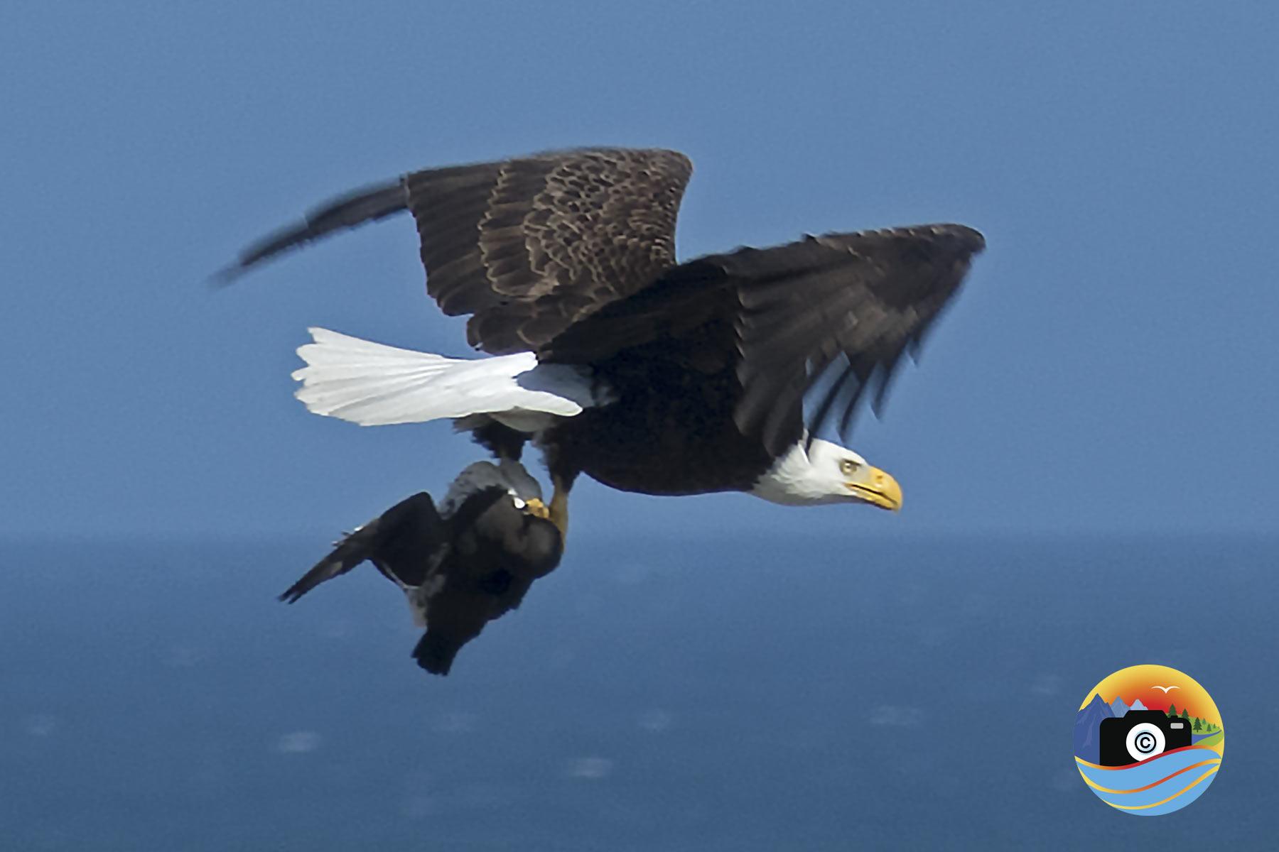 EAGLE-EATS-3