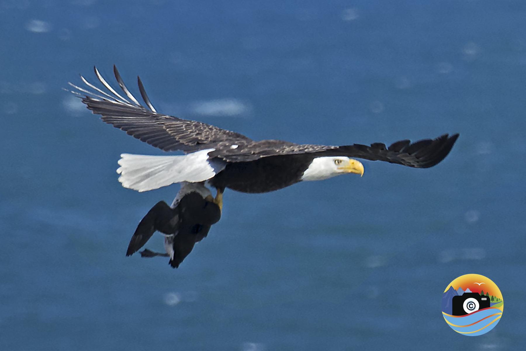 EAGLE-EATS-4