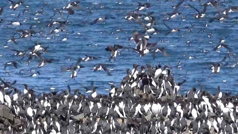 A Blizzard of Birds