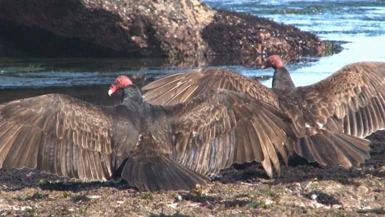 The Value of Vultures